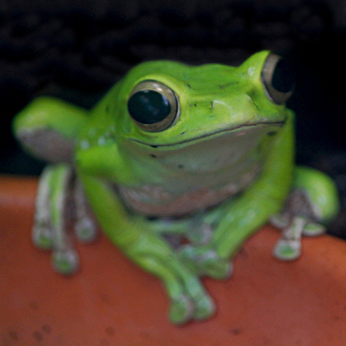 Guided frog